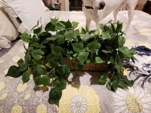 Fake decorative plant for Sale in Irving, TX