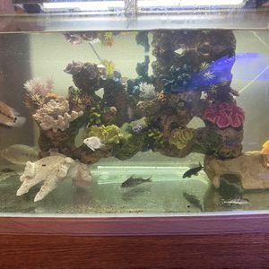 Fish Tanks for Sale in Corona, CA