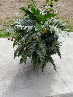 Artificial Plant for Sale in Hallsville,  TX