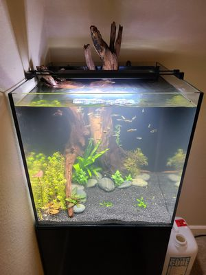 Rimless aquarium and stand 40 gallon fish tank for Sale in Kirkland, WA