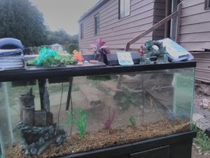 50 gl fish tank w pumps,filters,heater and decor for Sale in Gig Harbor, WA