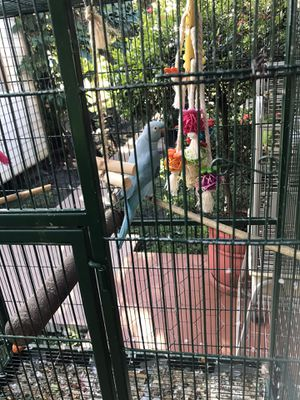 Bird cage for Sale in Miami, FL