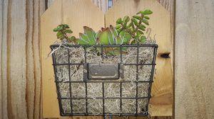 Succulents for Sale in Ontario, CA