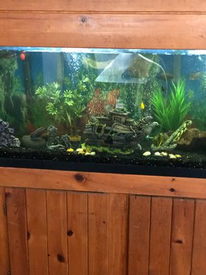 55 gallon tank and canapy and stand and gravel and filters for Sale in Fort Walton Beach, FL