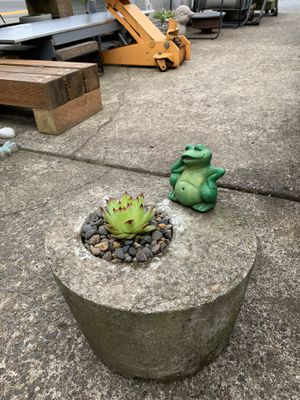 Succulent for Sale in Vancouver, WA