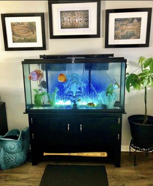 65 gallon fish tank with two pumps and discus fish for Sale in Salt Lake City, UT