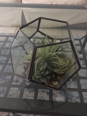 Succulent for Sale in Chicago, IL