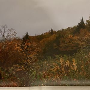 "14"" x 11"" photo of the changing leaves in Maine for Sale in Glen Ellyn, IL"