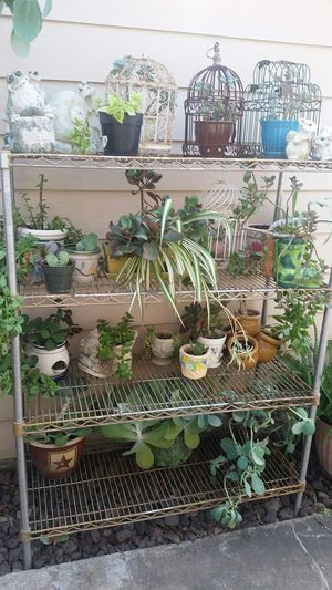 Plant sale, plants, potted plants, hanging plants, plant stands, plant Shelf, $10 and up for Sale in Missouri City, TX
