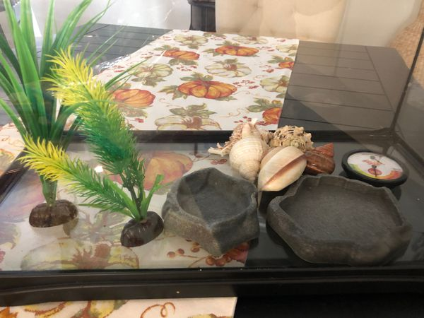 Crabs or reptile tank and food bowls, hydrometer, shells and decor plants