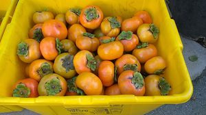 Persimmons for Sale in San Jose, CA