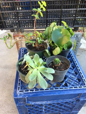Total of 4 kinds of plants for Sale in Fresno, CA