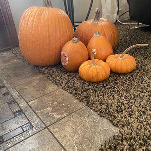 Free Pumpkins for Sale in La Puente, CA