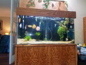 90 gallon sea clear acrylic aquarium for Sale in Azusa, CA