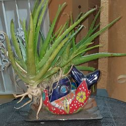 Aloe Vera plant In a Fish pottery for Sale in Lynwood,  CA
