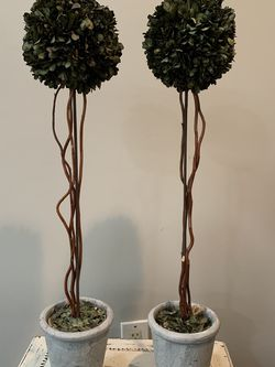 Small Boxwood Topiary for Sale in Los Angeles,  CA
