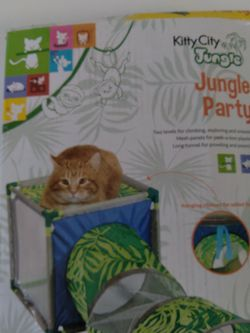Kitty City Jungle Party for Sale in Casselberry,  FL