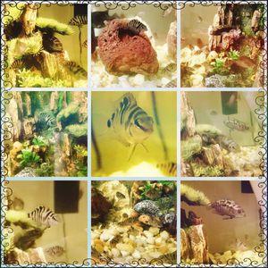 Aquarium fish tank equipment for Sale in El Cajon, CA