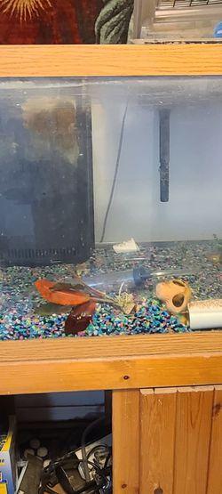 70 Gallon Salt Water Fish Tank Turtle Terrarium for Sale in Seffner,  FL