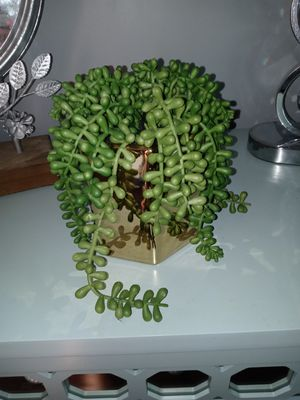 Artificial Potted Faux plant for Sale in Benbrook, TX