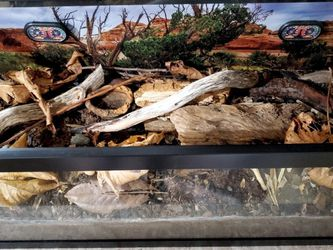 20-gal Tank w/isopods, mealworms, millipedes! for Sale in Kent,  WA