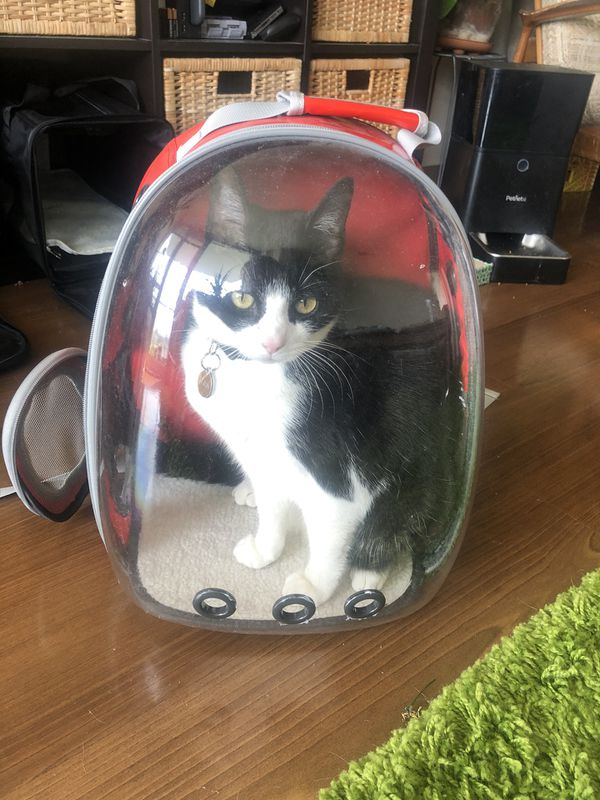 Cat Carrier Backpack Bubble $45