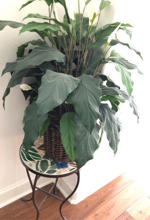 Indoor plant for Sale in Irvine, CA