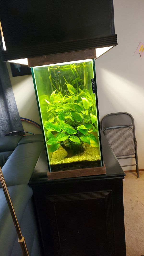 Custom aquarium stand and aquarium 100 gallon