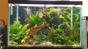Aquarium for Sale in Centreville, VA