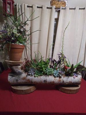 Succulents en bello tronco EXTRA GRANDE for Sale in Bell, CA