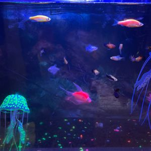 Freshwater Fish for Sale in Fort Myers, FL