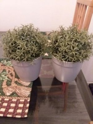 Two fake plants from IKEA for Sale in Chandler, AZ
