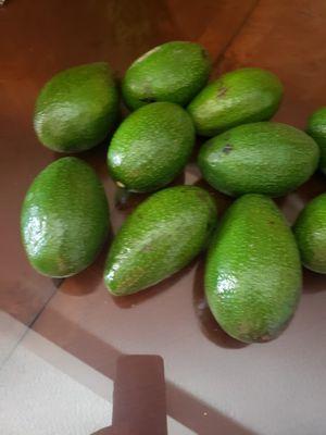 Avocado for Sale in Colton, CA