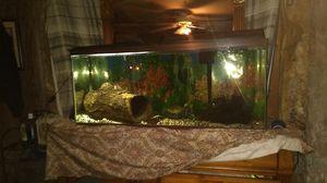 55 gallon fish tank for Sale in Kinston, NC
