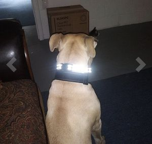 Dog Training Collar for Sale in Queens, NY