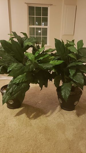 Fake plants for Sale in Boyds, MD
