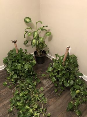 Plants for Sale in Orlando, FL