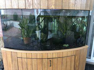 Aquarium Corner 100 Gallon Custom Made for Sale in Los Angeles, CA