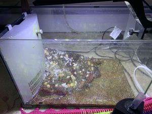 aquarium fish tank for Sale in Prospect Heights, IL