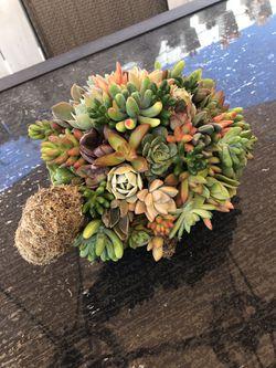 Succulent turtle topiary for Sale in Vista,  CA