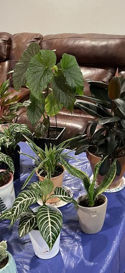 Huge Varieties Of Nice And Healthy Air Purifying Nice Potted House Plants, Read Description for Sale in Aurora,  CO