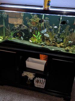 75 Gallon Fish Aquarium for Sale in Turlock,  CA