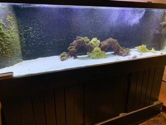 120 Gallon Salt Water Aquarium for Sale in Ocala,  FL