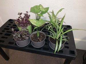 House Plants for Sale in West Peoria, IL