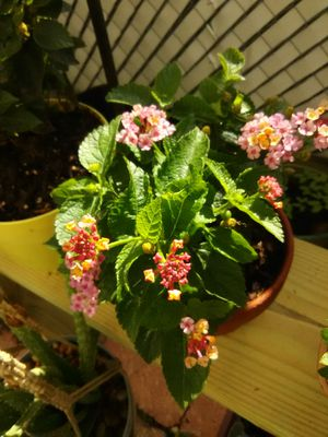 Plants 4 Sale for Sale in Kissimmee, FL