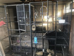 2 bird cages need gone ASAP! for Sale in Land O Lakes, FL