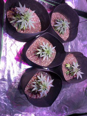 Indoor grow tent for Sale in San Jose, CA
