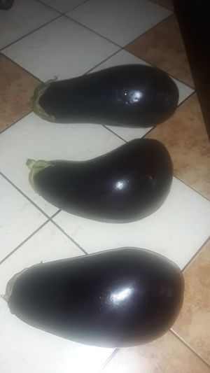 FREE Big Egg plants for Sale in Riverview, FL