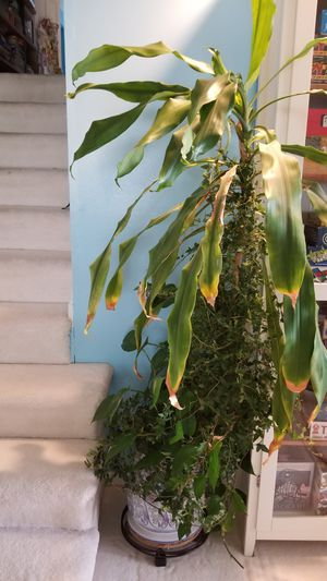 Planter with live indoor plants for Sale in Hinsdale, IL