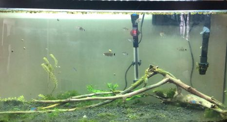 Curved 55 Fish Tank for Sale in Yakima,  WA